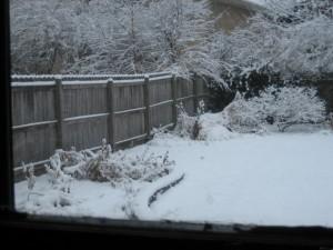 Christmas garden2 2010