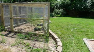 garden enclosure3