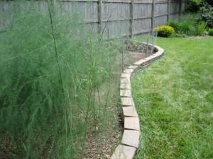 garden1 2011