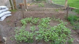 garden1 5-25-15