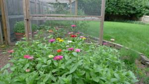 garden1 6-24-15