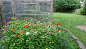 garden1 7-10-16