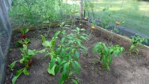 garden1 7-24-21