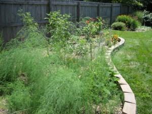 garden1 July 10 '10