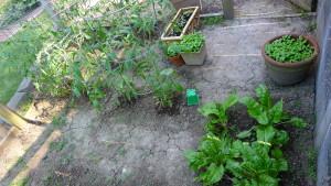 garden1 June 14 2020