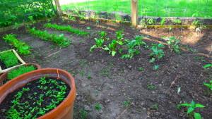 garden1 May 23, '16