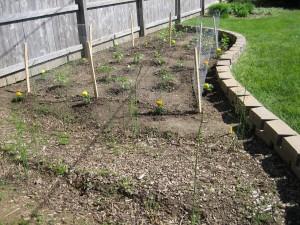 garden1 May 4 2010