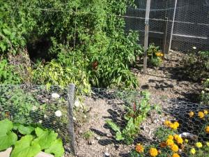 garden1 Oct 5, '09