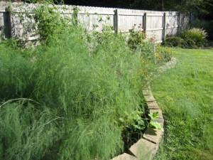 garden1 Sept 29 '10