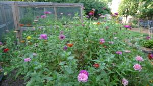 garden1 Sept 5 '15