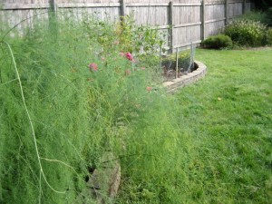 garden1 sept 15 2011