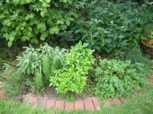 garden10 Aug 17 '10