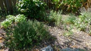 garden11 june 20,2012