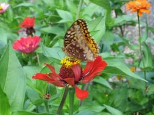 garden12 July 10 '10