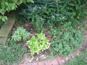 garden14 sept 15 2011