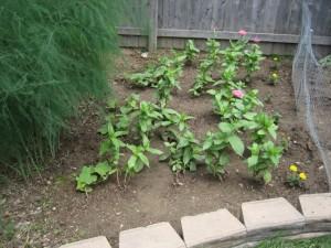 garden2 2011