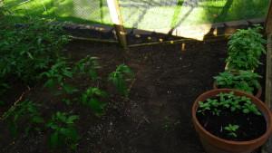 garden2 6-21-17