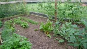 garden2 7-10-16