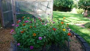 garden2 7-30-17