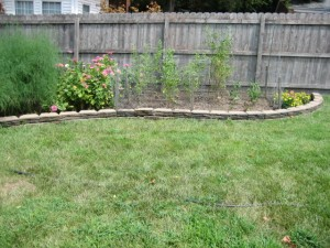 garden2 August 6 2011