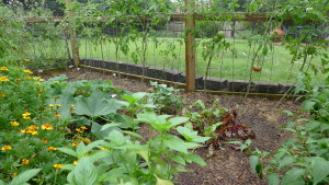 garden2 July 26 '15