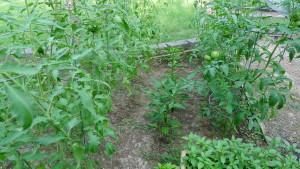 garden2 July 9 2020