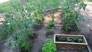 garden2 June 14 2020