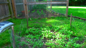 garden2 May 23, '16