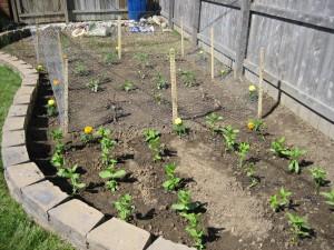 garden2 May 4 2010
