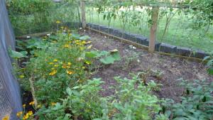 garden2 Sept 5 '15