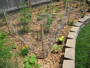 garden2 june 10 2010