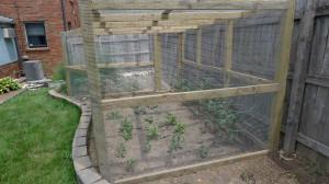 garden2 june 20, 2012