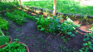 garden2 june 7 '16