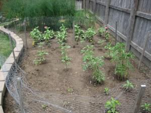 garden3 2011