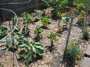 garden3 July 10 '10