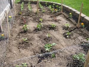 garden3 May 4 2010