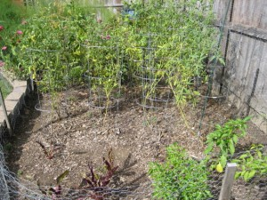 garden3 sept 15 2011