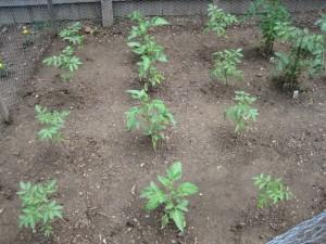 garden4 2011