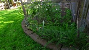 garden4 6-21-17