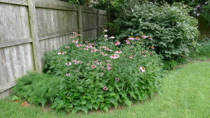 garden4 7-5-19