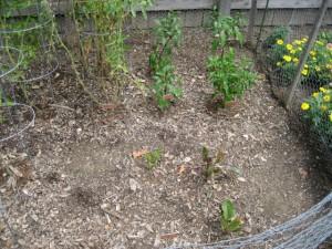 garden4 August 6 2011