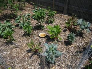 garden4 July 10 '10