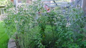 garden4 July 9 2020