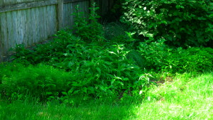 garden4 May 23, '16