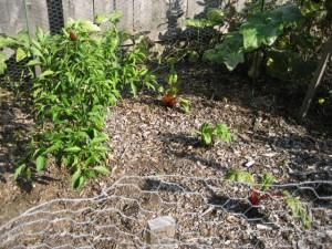 garden4 Sept 29 '10
