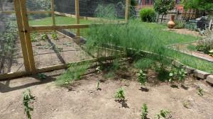 garden4 june 20, 2012
