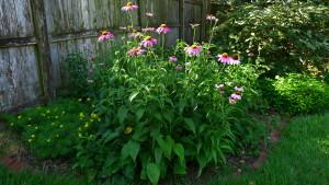 garden5 6-21-17