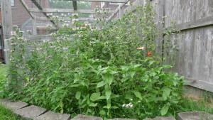 garden5 7-5-19