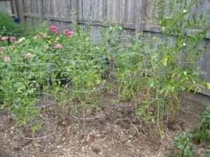 garden5 August 6 2011