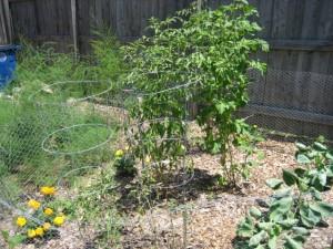 garden5 July 10 '10